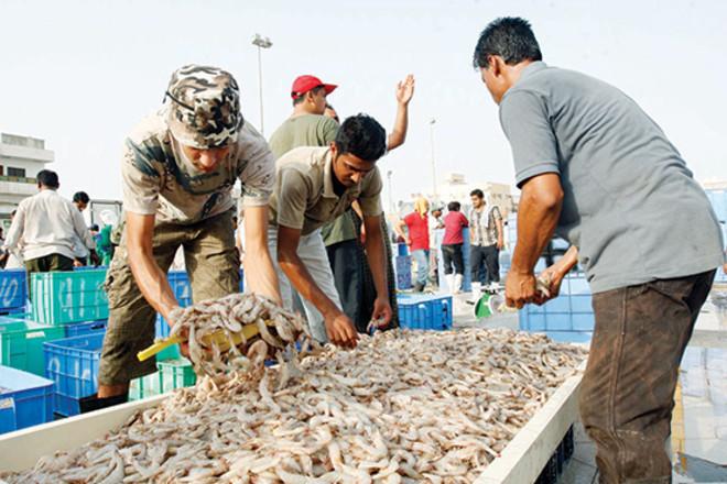 تقلص في محال وباعة أسواق السمك .. 60 % أجانب