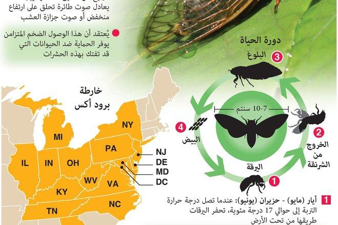 """بعد بقائها لـ 17 عاما تحت الأرض .. تريليونات من حشرات """"السيكادا"""" تستعد لغزو أمريكا"""