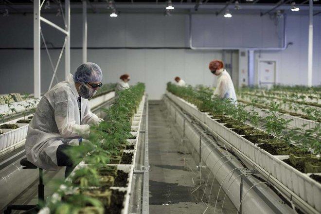 الزراعة في أوروبا .. انقسام حول الدعم  ينبئ بهزات في العرض والطلب