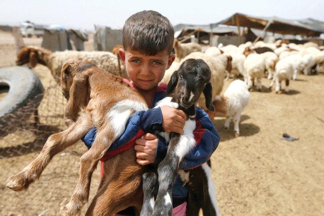 صبي مربي ماشية يحمل حملين في قرية غزلانية جنوب شرقي العاصمة السورية دمشق