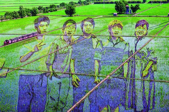 فنون الأرز