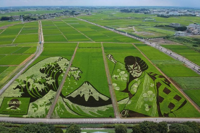 ظلال الأرز