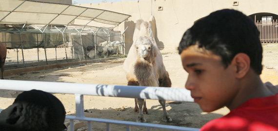 حديقة حيوانات الرياض 60 عاما بلا تطوير جوهري صحيفة الاقتصادية
