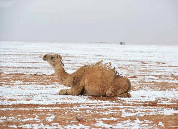 اليوم انخفاض درجات الحرارة وهطول أمطار على الرياض صحيفة