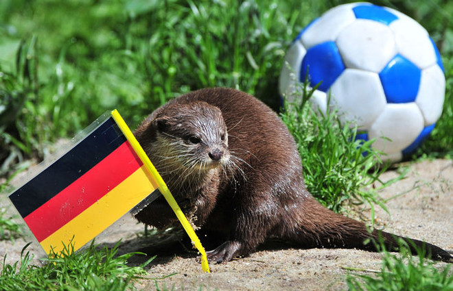 النمس يختار علم ألمانيا ويتوقع فوزها على الدنمارك في مباراتهم المقبلة