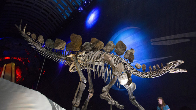 قصة مصورة : عرض هيكل عظمي نادر لديناصور عمره 150 مليون عام في لندن