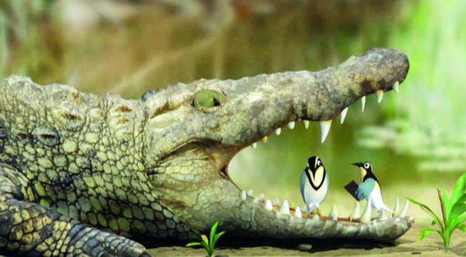 التمساح وعصفور القطقاط .. مصلحة مشتركة