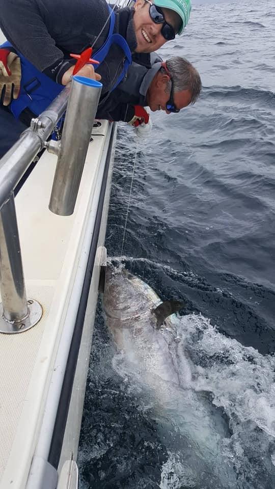 صيادون يعيدون سمكة تونة قيمتها 3 مليون دولار للمياه