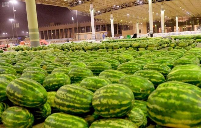 مع بداية الموسم .. 500 مزرعة في القصيم ترفد السوق المحلي ...