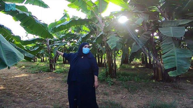 سيدة سعودية تقود المملكة للمنافسة العالمية في زراعة الموز