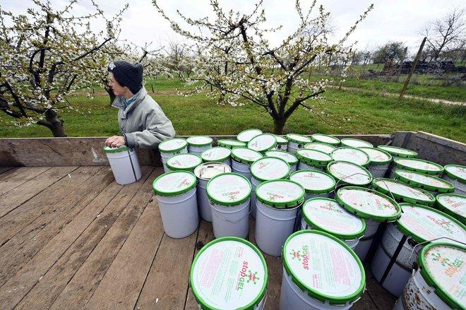 شموع مقاومة الصقيع لحماية المحاصيل الزراعية