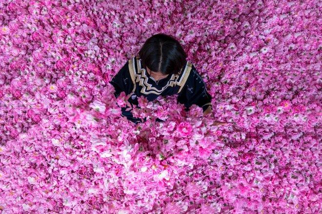 """أرامكو تدشن مصنع الورد الطائفي """"روزيار"""""""