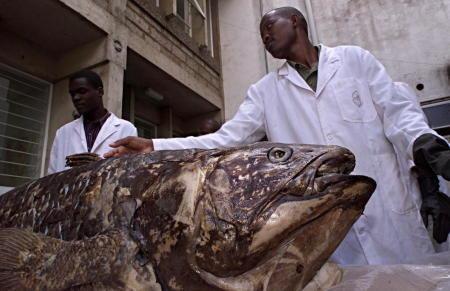 ظهرت قبل 400 مليون سنة .. سمكة أقدم من الديناصورات تدهش العلماء