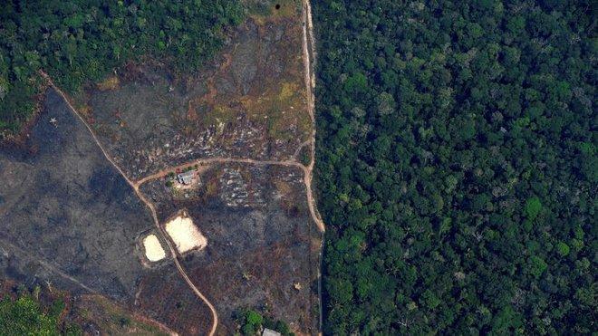 """""""مجرد بداية"""" .. شركات تقود مشاريع الغابات بمليار دولار"""
