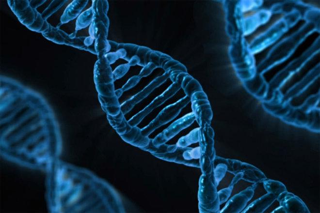 منظمة الصحة العالمية تسعى إلى كبح التلاعب بالمجين البشري