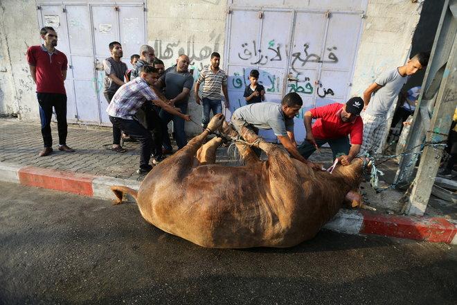 المسلمون يحتفلون بأول أيام عيد الأضحى