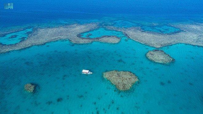 الاسترخاء والاستكشاف .. تجارب سياحية تقدمها أملج على متن القوارب