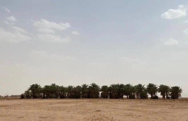 """بعد إنجارها من """"إحكام"""" .. تسليم عدد من المواطنين وثائقهم لطلبات تملك العقارات في حائل"""