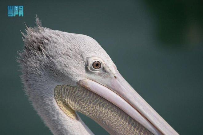 تسجيل محمية جزر فرسان في برنامج الإنسان والمحيط الحيوي في اليونسكو