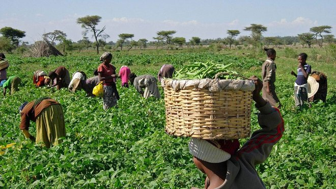 500 مليار دولار حجم سوق الأغذية العضوية بحلول 2027