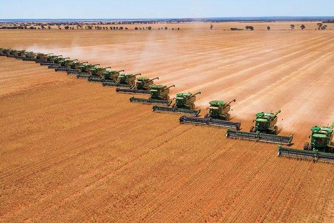 """«الحبوب» لـ """"الاقتصادية"""" : آليات للرقابة على الخزن الاستراتيجي للغذاء والتوزيع وإعادة التدوير"""