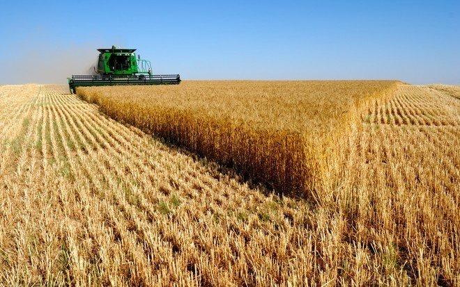 صرف 15.8 مليون يال تمثل مستحقات الدفعة 12 لمزارعي القمح المحلي