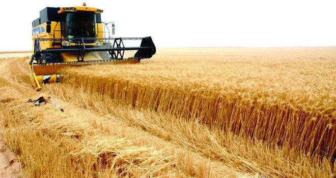 إيداع 729 مليون ريال لمزارعي القمح المحلي منذ بداية 2021