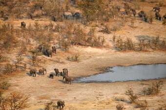 الجفاف والجمرة الخبيثة يقتلان 100 فيل في بوتسوانا
