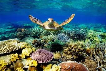 أستراليا تستثمر 96.5 مليون دولار لتحسين جودة المياه في الحيد المرجاني العظيم
