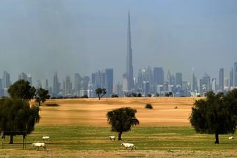 الإمارات توقف تداول الصحف والمجلات والمنشورات الورقية مؤقتا باستثناء الاشتراكات