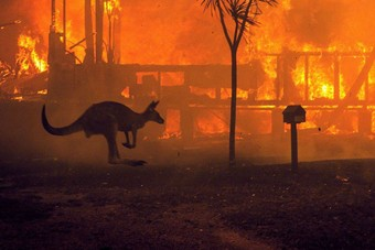 حرائق أستراليا قتلت وشردت 3 مليار حيوان