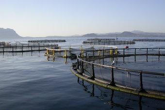 تنفيذ 5 مشروعات مائية وبيئية بتكلفة تتجاوز 108 ملايين ريال