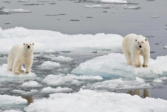 التغير المناخي يؤثر مباشرة في النظام الغذائي للحيوانات