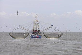 بعد عقدين من الإعداد .. معاهدة عالمية لحماية التنوع الإحيائي البحري في مراحلها النهائية