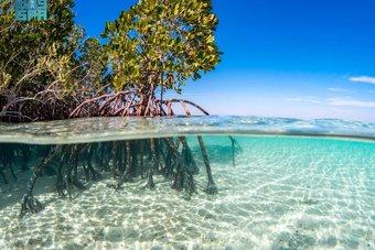 مشروع البحر الأحمر يقدم أنموذجا عالميا في إنتاج المياه باستخدام الطاقة المتجددة