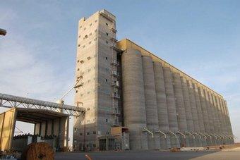 """""""الحبوب"""" تبدأ صرف أولى دفعات مستحقات مزارعي القمح المحلي لهذا الموسم.. بلغت 94 مليون ريال"""
