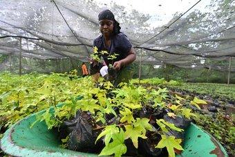 أكبر منتج عالمي للكاكاو يواجه خطر إزالة الغابات