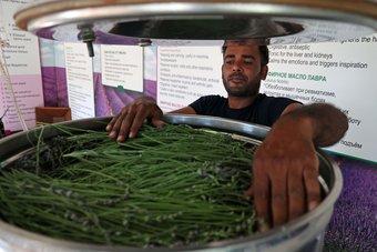 قبرص تعزز قدرتها على جذب السياح بزراعة النباتات العطرية