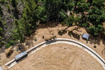 شاحنات تغلق طرقا في الصين لمنع مرور قطيع من الفيلة إلى قرى مأهولة
