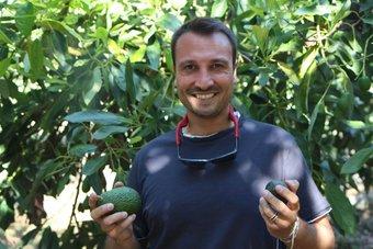 زراعة الأفوكادو في صقلية تخبرنا الكثير عن تغير المناخ ومستقبل الغذاء