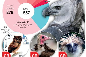الطيور الجارحة تواجه انخفاضا في أعدادها على الصعيد العالمي