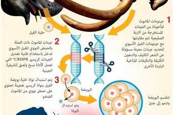علماء يخططون لاستعادة الماموث.. انقرض قبل 10 آلاف عام